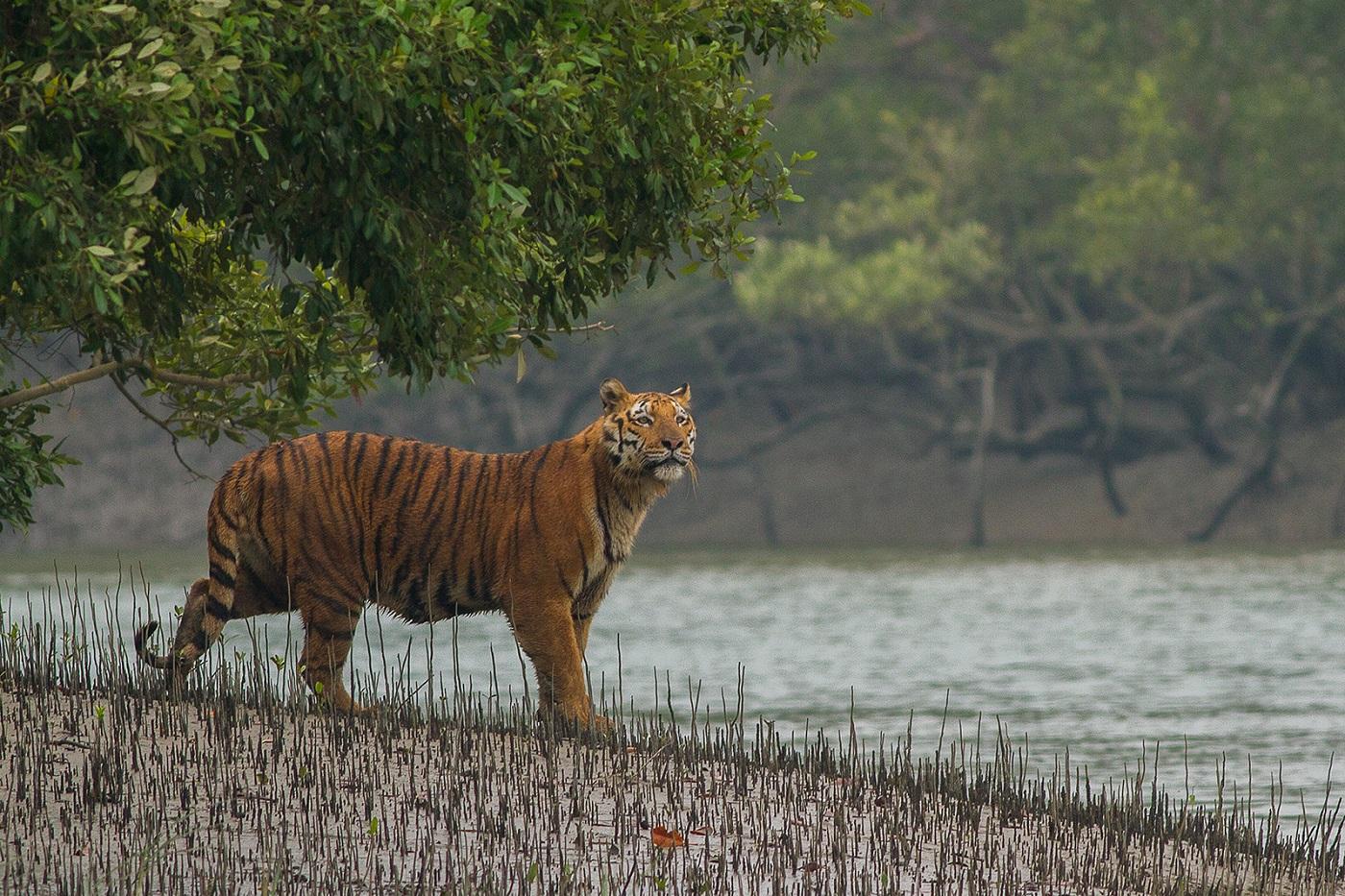 Sundarbans National Park, West Bengal