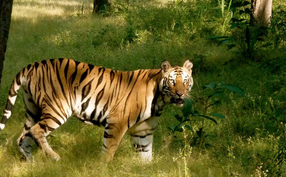 Bandhavgarh National Park Wildlife