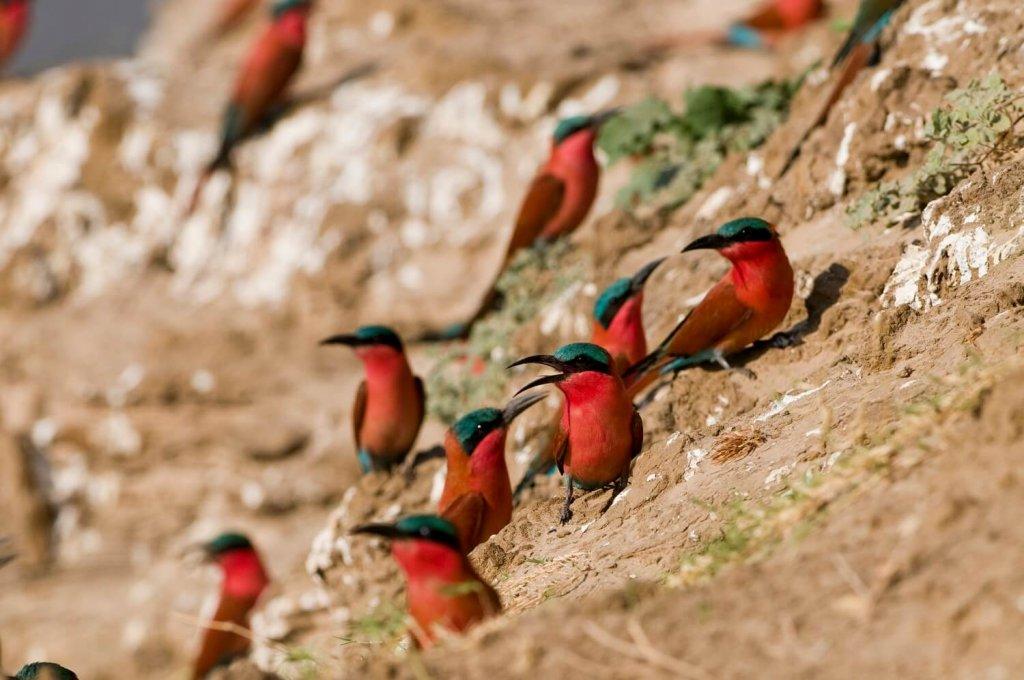 Mount Abu Wild Life Sanctuary