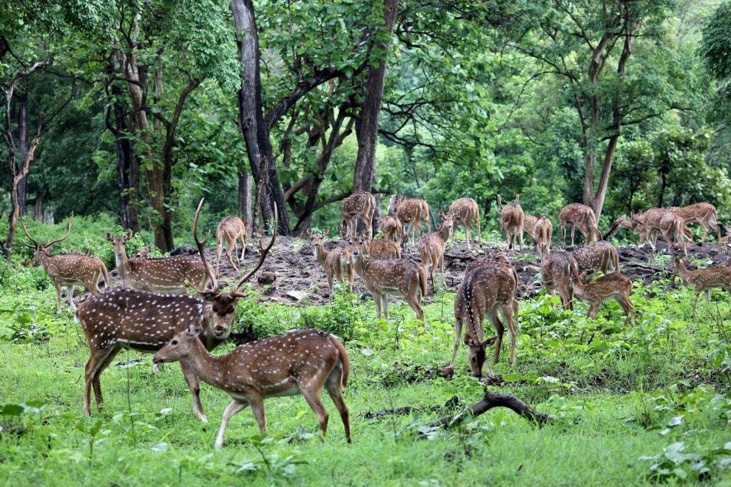 Mudumalai National Park, Karnataka