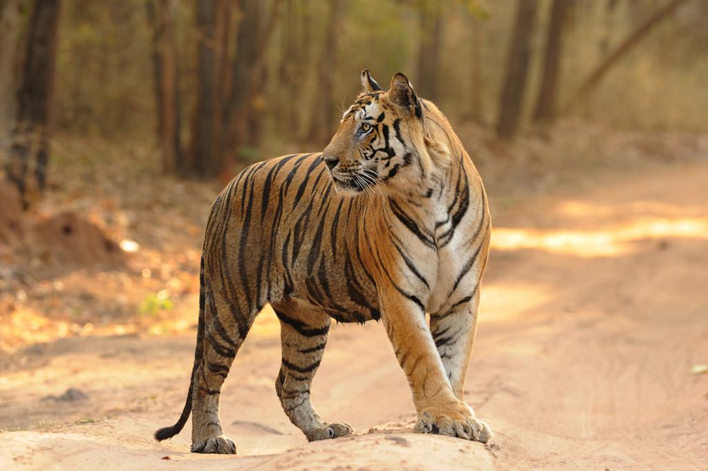 Bandhavgarh National Park