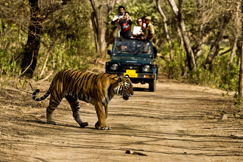 jim corbett tiger national park