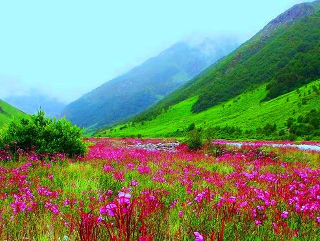 valley of flowers July