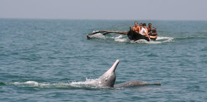 Dolphin Goa