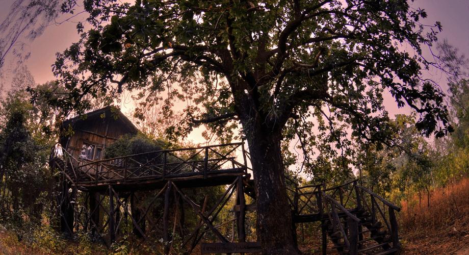 Tree house Hideaway, Madhya Pradesh