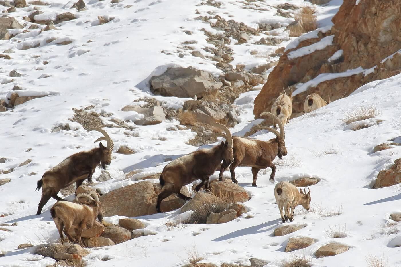 Wildlife Sanctuary Ladakh