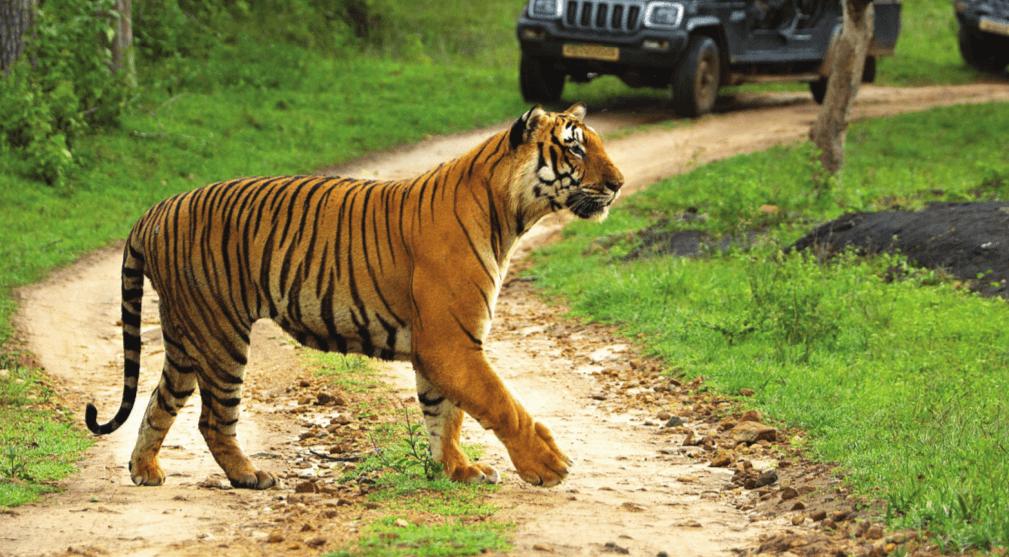 Bandipur National Park Tiger Reserve