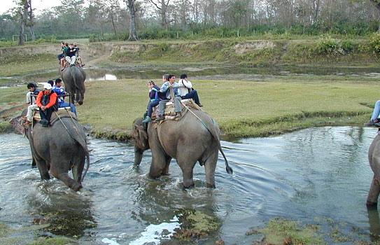 Elephant Safari Bandipur National Park