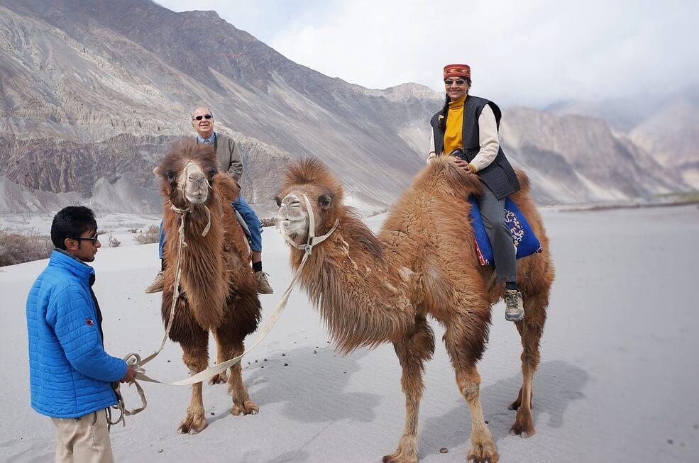Bactrian Camels Safari Nubra Ladakh