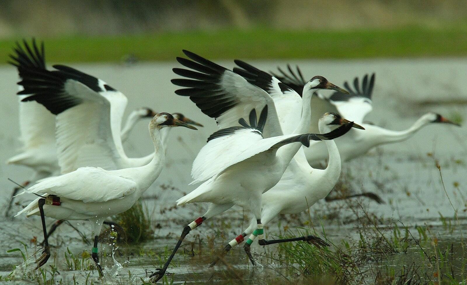 Sultanpur National Park and Bird Sanctuaries