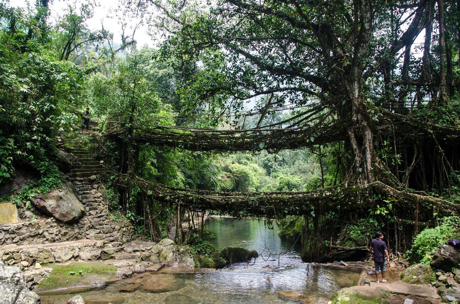 Living Bridge of Root, Meghalaya