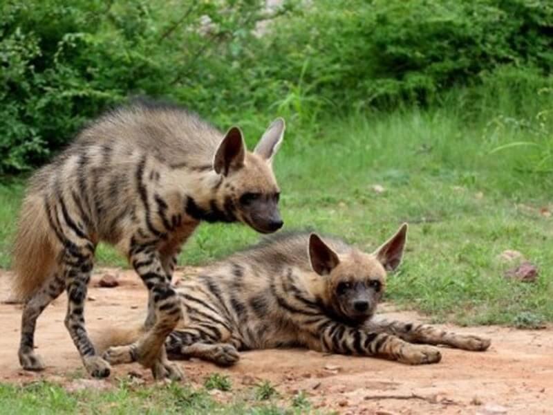 Keladevi wildlife sanctuary