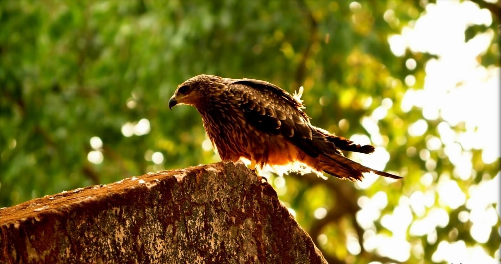Simlipal National Park for Photography in India