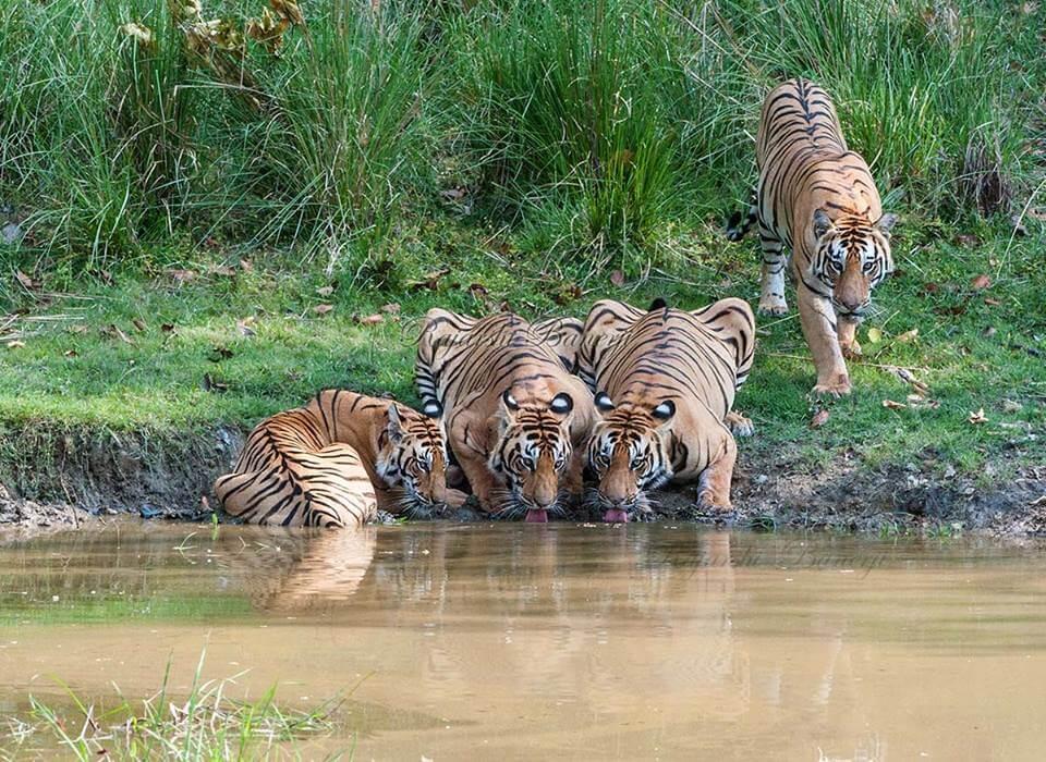 Achanakmar Tiger Reserve