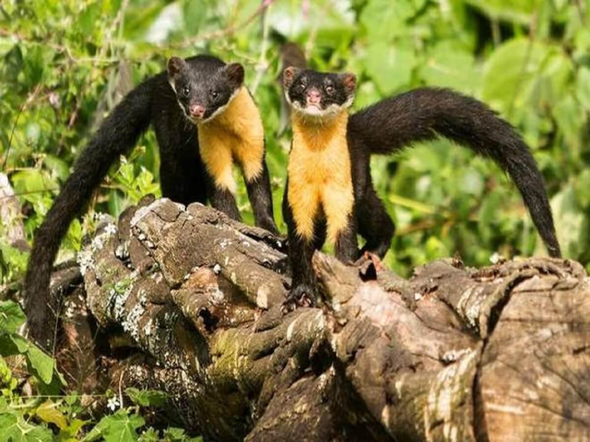 Pampadum Shola National Park