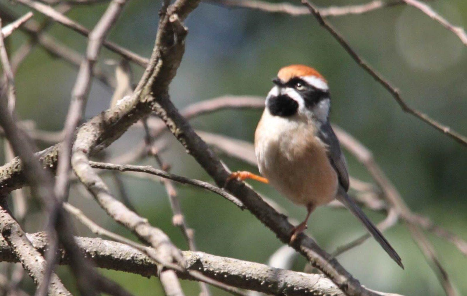 Pangot and Kilbury Bird Sanctuary