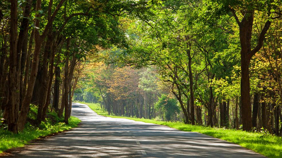 Bandipur to Bangalore Road Trip