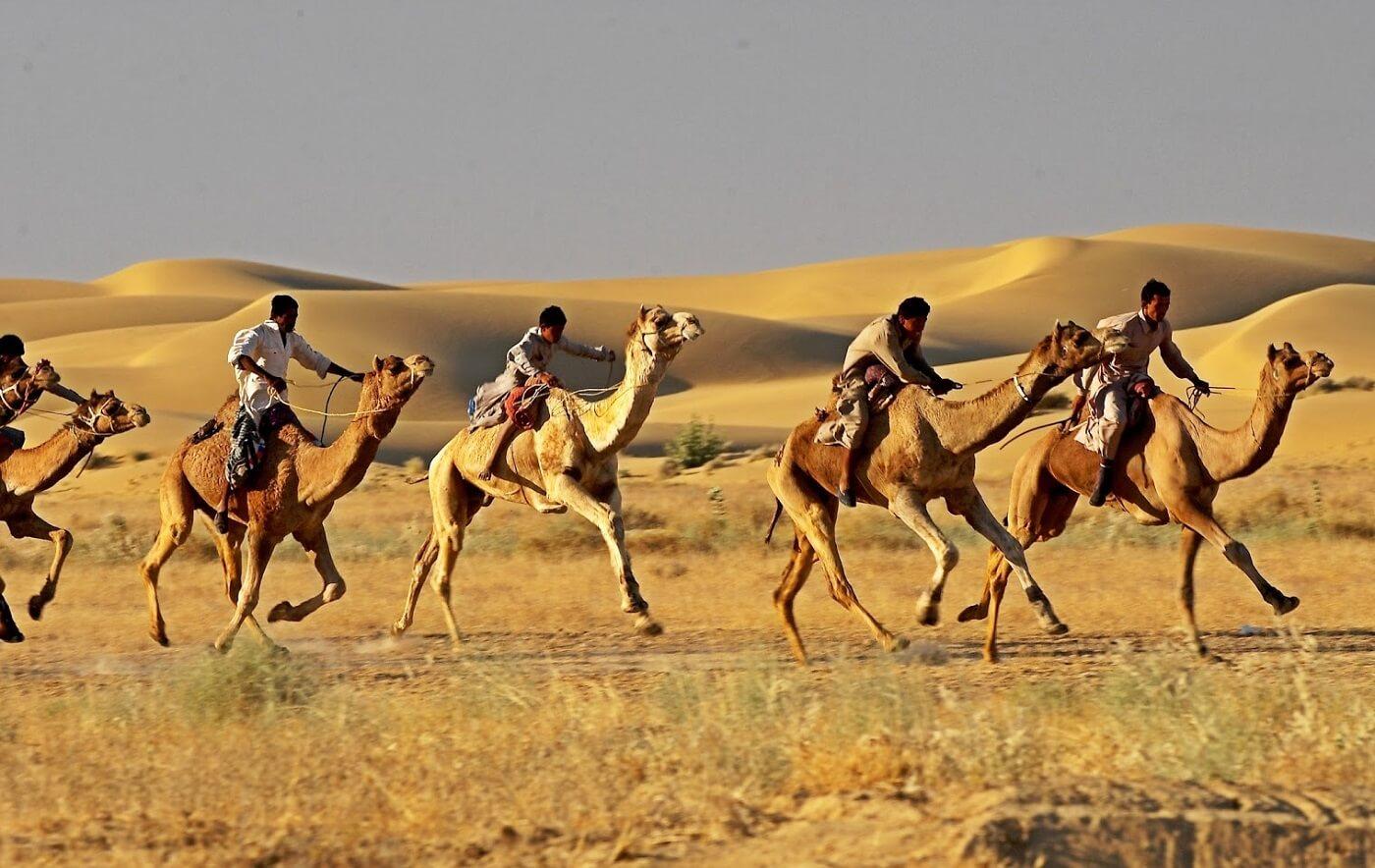 Camel Race at Jaisalmer Desert Festival