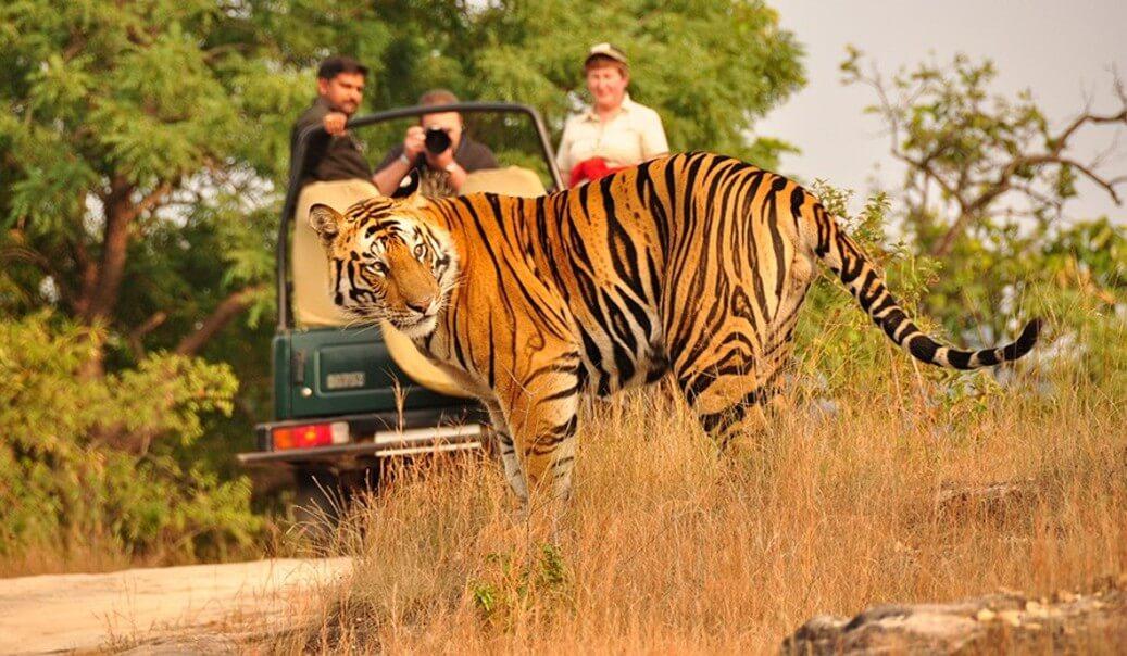 Kanha National Park. Madhya Pradesh