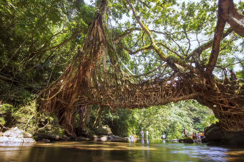 Living Root bridge, Mehgalaya