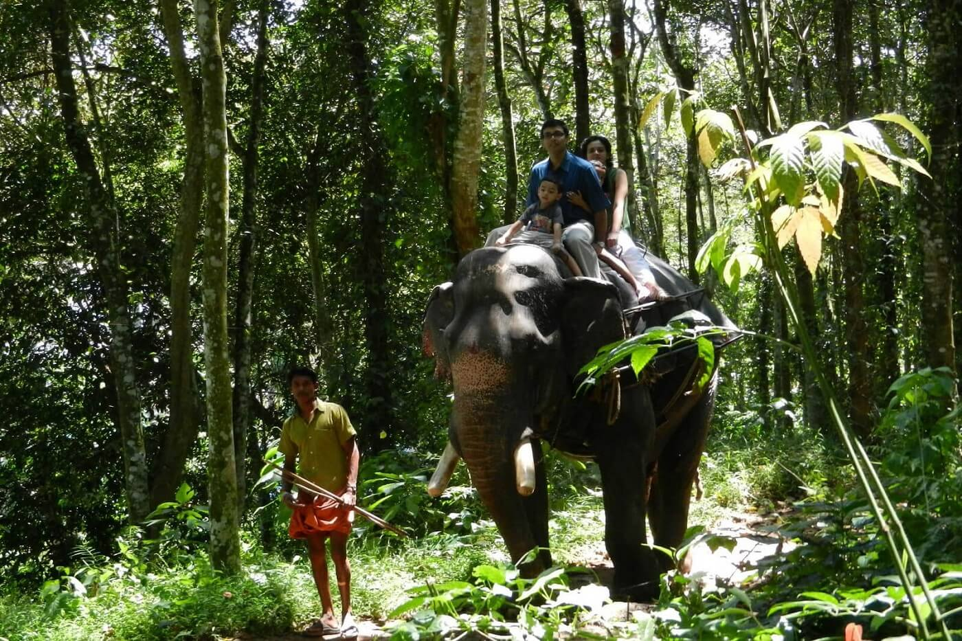 Thekkady Elephant Safari with Kids
