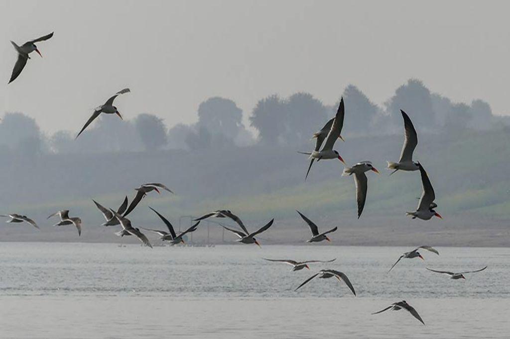 Bonal Bird Sanctuary (Karnataka)