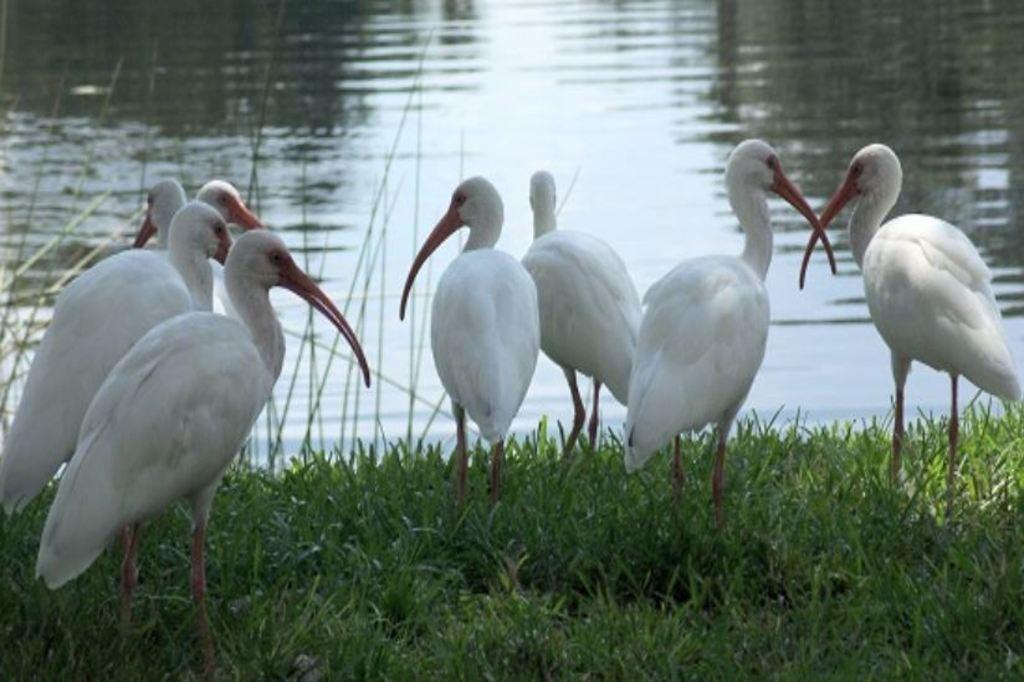 Kaundinya Bird Sanctuary (Andhra Pradesh)?