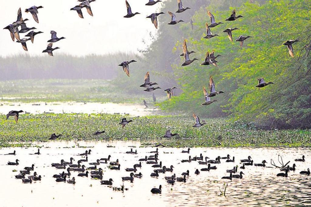 Okhla Sanctuary (Uttar Pradesh)