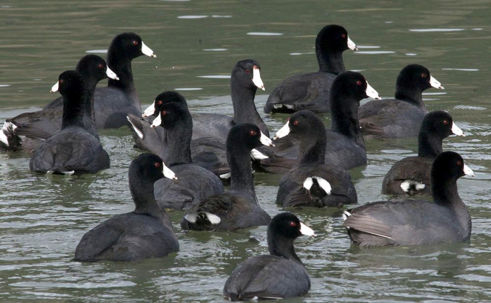 Porbandar Bird Sanctuary, Gujarat