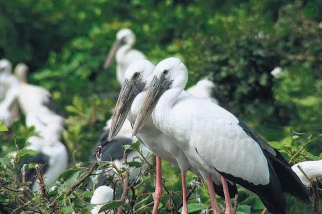 Raiganj Bird Sanctuary  (West Bengal)?