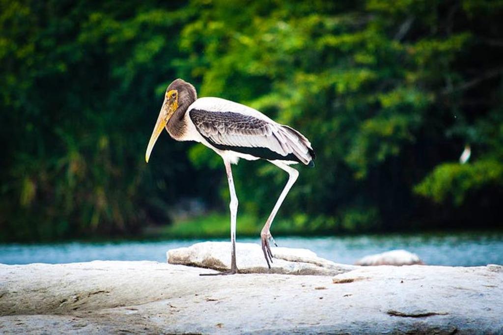 Ranganathittu Bird Sanctuary (Karnataka)?