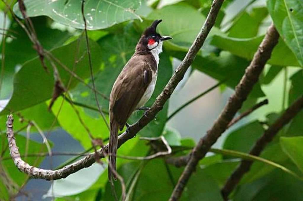 Thattekad Bird Sanctuary (Kerala)